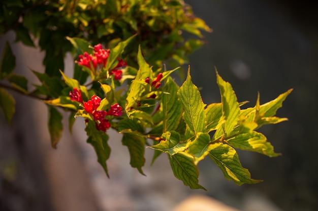 나무 가지. 여름날 이별