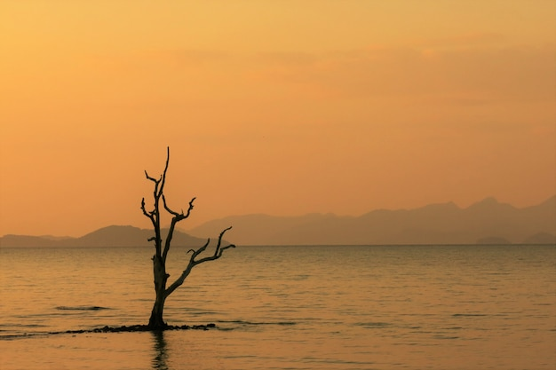 A tree branch in the sea during the sunset time with the beautiful orange sky and some island faraway