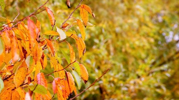 秋の鮮やかな葉を持つ木の枝