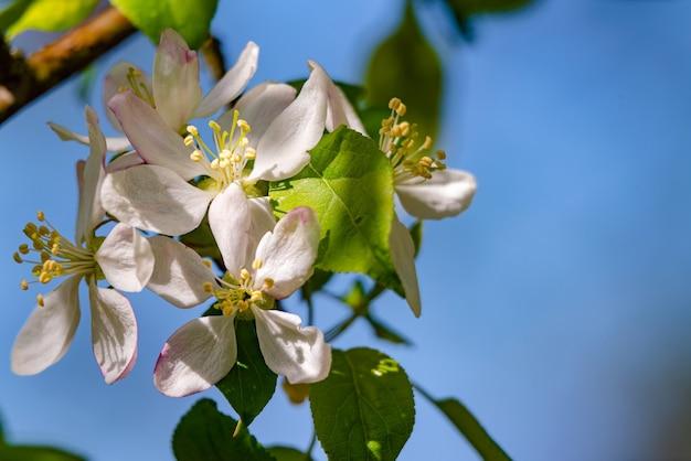 Ветка дерева с цветами на фоне голубого неба