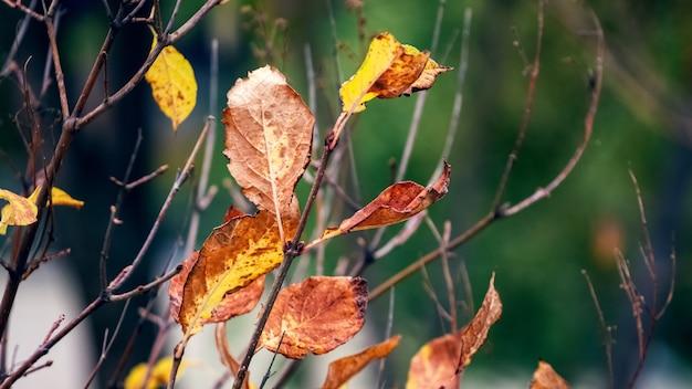 背景をぼかした写真に鮮やかな紅葉を持つ木の枝