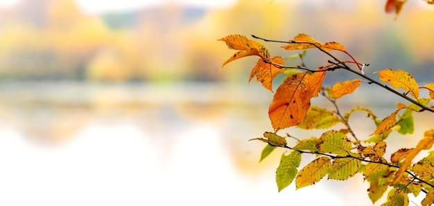 川沿いの色とりどりの紅葉、パノラマ、コピースペースの木の枝
