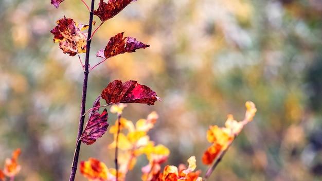 背景をぼかした写真に色とりどりの紅葉を持つ木の枝
