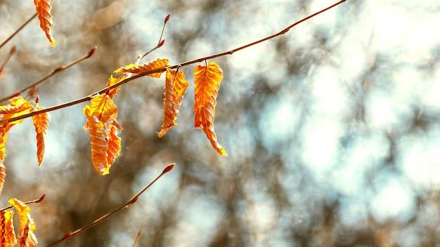 晴れた日に秋の紅葉が枯れる木の枝