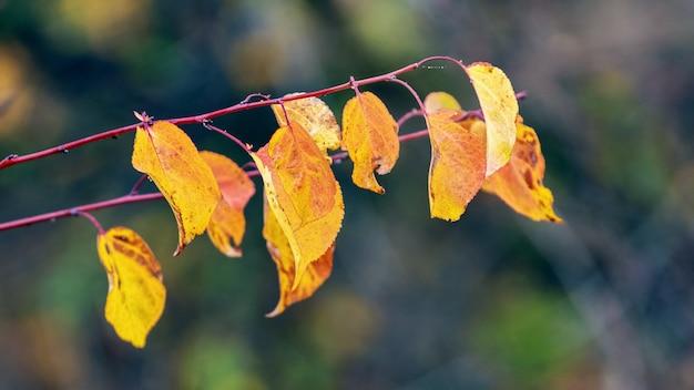 ぼやけた背景に森の中の乾燥した黄金色の紅葉を持つ木の枝