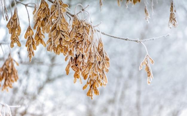 明るい背景に霜で覆われた葉を持つ木の枝_