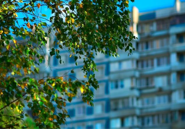 緑の葉ボケ背景と木の枝
