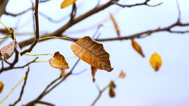 最後の紅葉をした木の枝