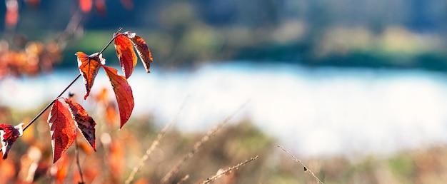 川の近くに赤い紅葉のある木の枝。晴れた秋の日