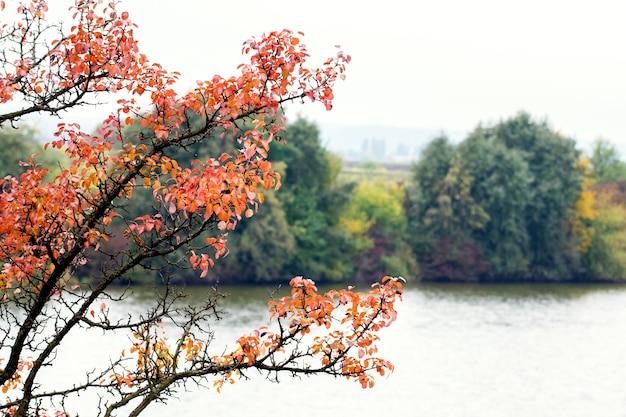 川の背景に赤い葉を持つ木の枝