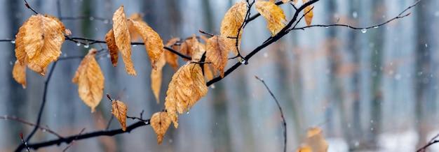 雪解けの冬や雨天の晩秋の枯れ葉のある木の枝