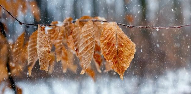 雪解けの冬や雨天の晩秋に枯れた葉を持つ木の枝