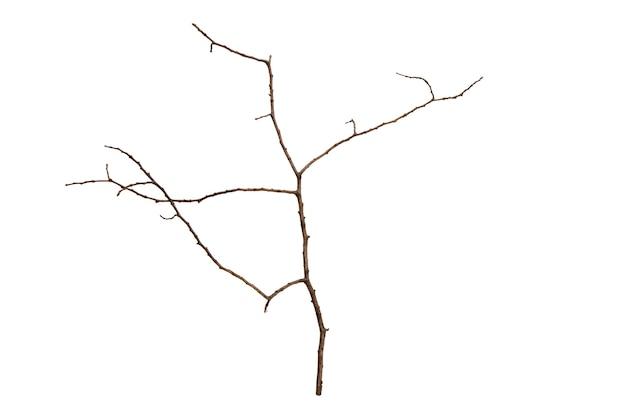 白い背景で隔離の葉のない木の枝