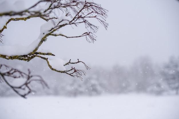 눈 속에서 나뭇가지입니다. 눈 덮인 겨울 풍경
