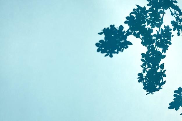 青い壁の背景に木の枝や顕花植物や影。