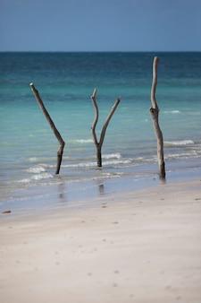 Ветки деревьев застряли в песке на пляже