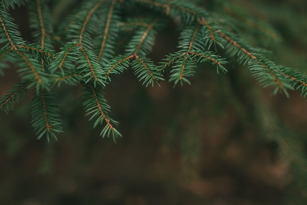 나뭇 가지, 소나무 바늘 닫습니다.