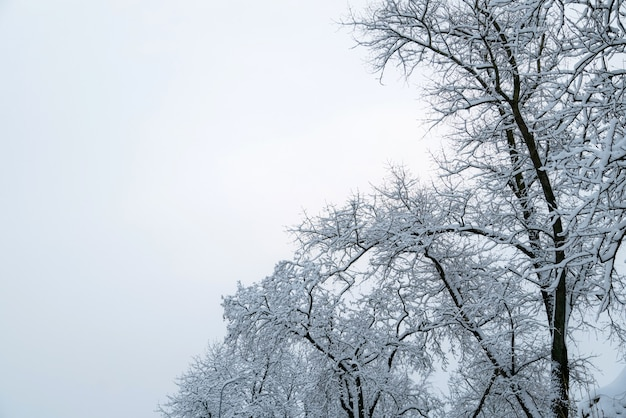 Ветви деревьев покрыты снегом и небом. зимний фон с копией пространства для текста.