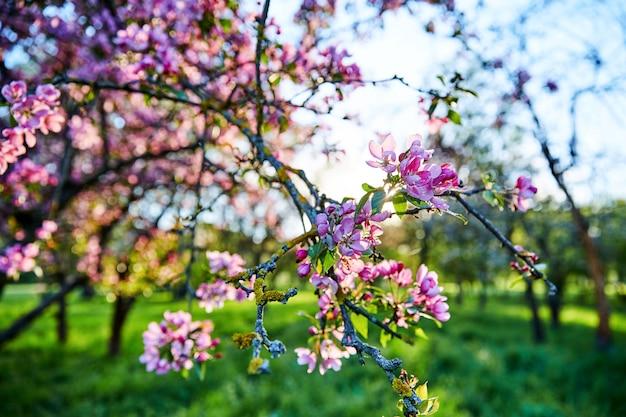 春に咲く木の枝