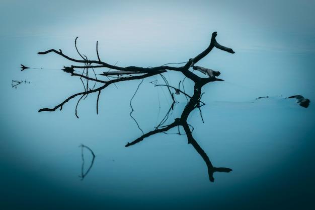 水中の木の枝と反射。