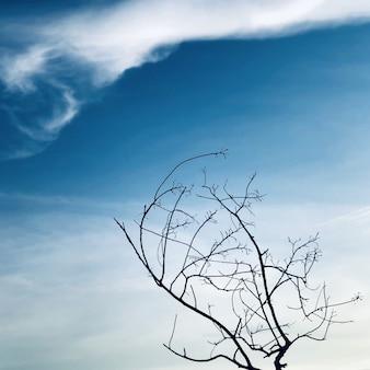 푸른 하늘과 흰 구름 배경과 텍스처에 나뭇 가지