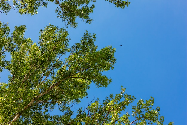 Tree branches with leaves with sky bue