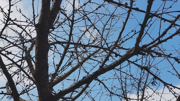 Tree branches with sky view