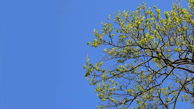 青い空の背景、夏の背景に若い緑の葉と木の枝