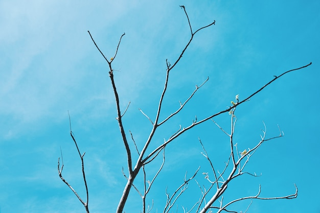 Tree branches without leaves on blue sky background