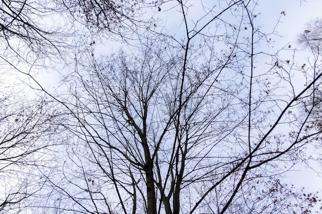 Tree branches without leaves