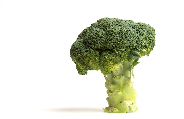 Tree of broccoli on white background
