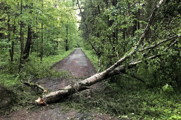 Tree broken during a severe thunderstorm blocks the path on the road in the park