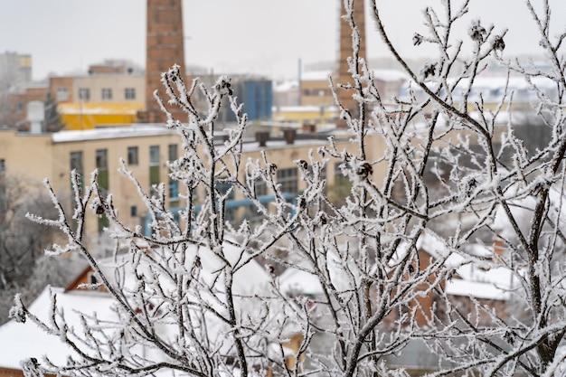工業団地の背景に降雪後、霜で覆われた木の枝。