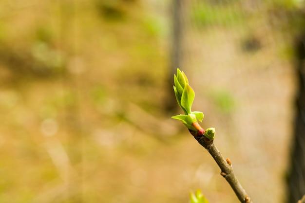 木の芽のクローズアップとマクロ