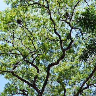 樹冠と青空