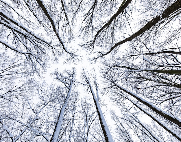 Tree canopy seen from below
