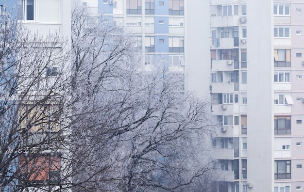 Tree covered in the snow with an apartment building on the in zagreb in croatia