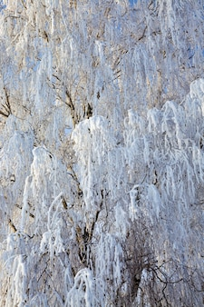 雪と霜で覆われた木
