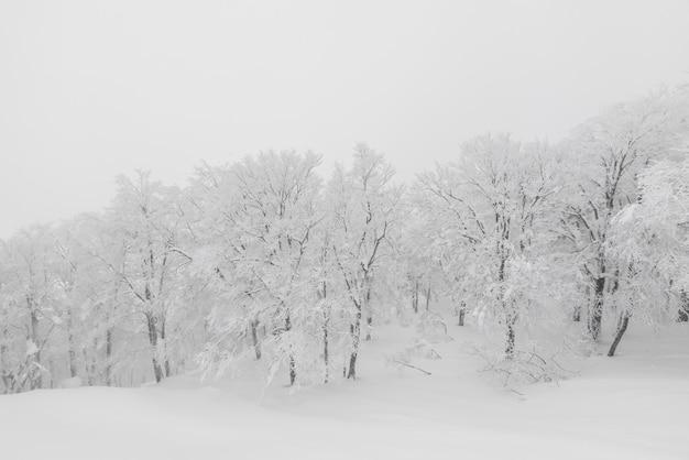 Albero coperto di neve sulla giornata di tempesta invernale in montagne forestali