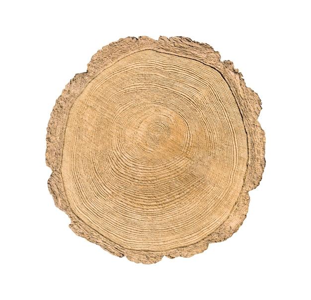 白い背景で隔離の木カットトランク。円形の一年生リングの切り株