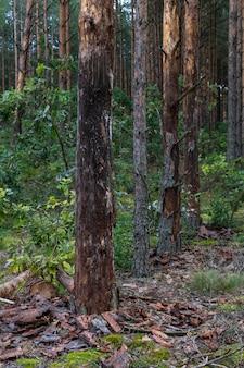 シロアリによって損傷した木。