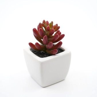 Tree decoration in a pot on white background.
