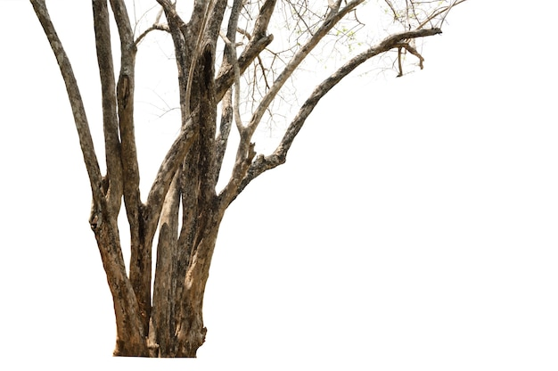 Tree dry isolated