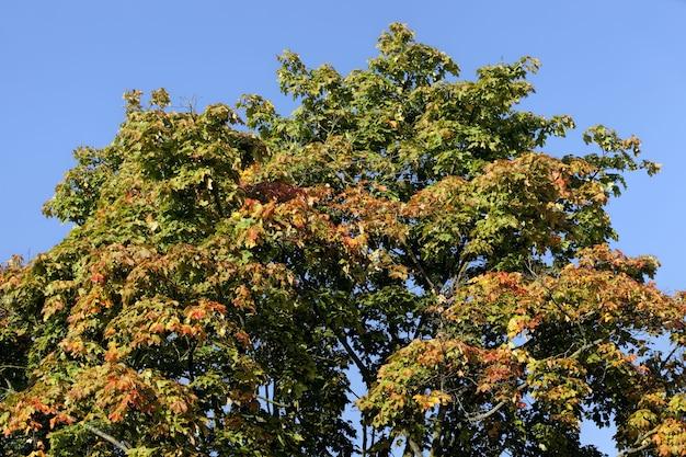 落葉中の木