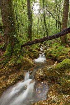 스페인 갈리시아 지역의 한 숲에서 나무가 작은 강 위에 떨어졌습니다.