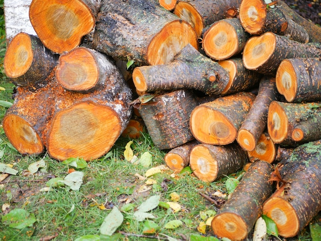 Tree felling concept. deforestation. deforestation concept image consisting of cut down forest trees.