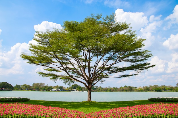 Tree and flower bed with blue sky background.