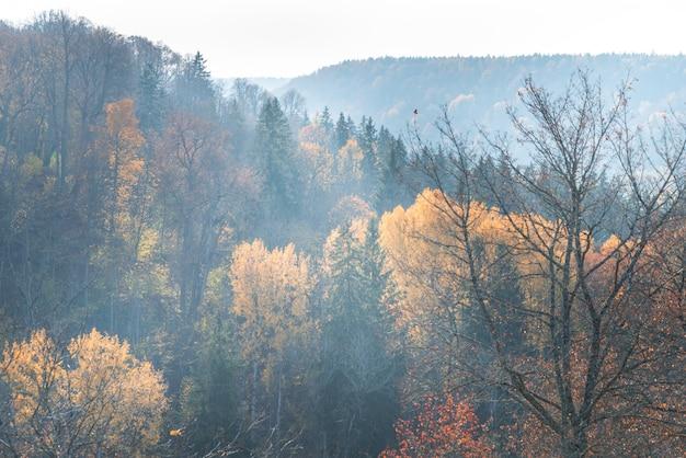 Лесной лес в осенний день, пейзаж
