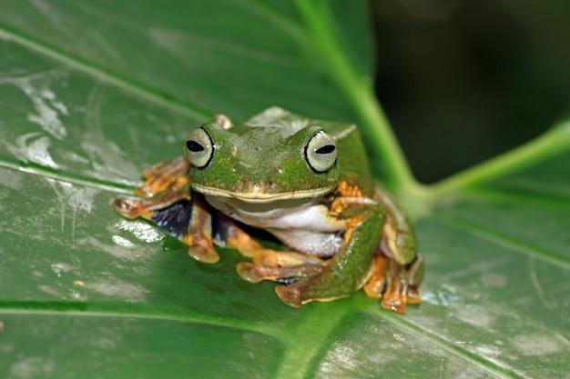 葉の上に座っているアマガエル、飛んでいるカエル