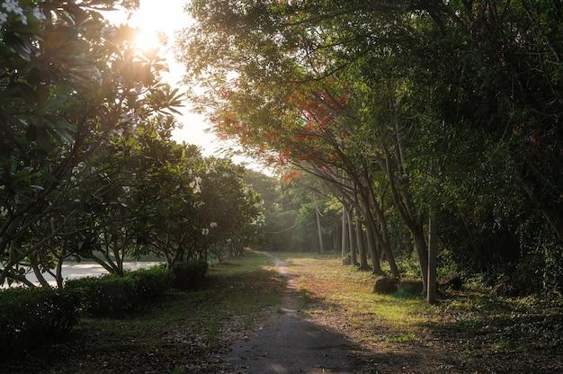 Сад деревьев с солнечным светом, сияющим на заднем дворе вечером